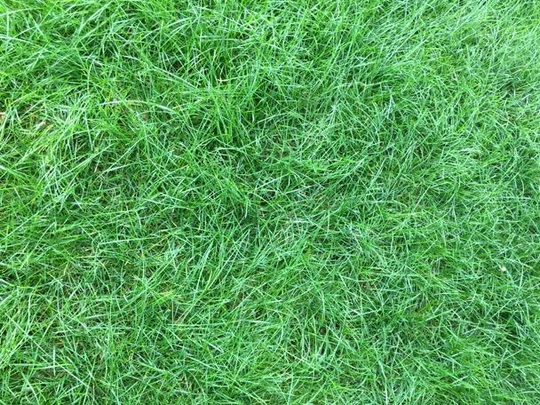 grassfrontlawn_070816-2016-07-8-10-11.jpg